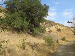 Santa Monica Mountains Trail Biking