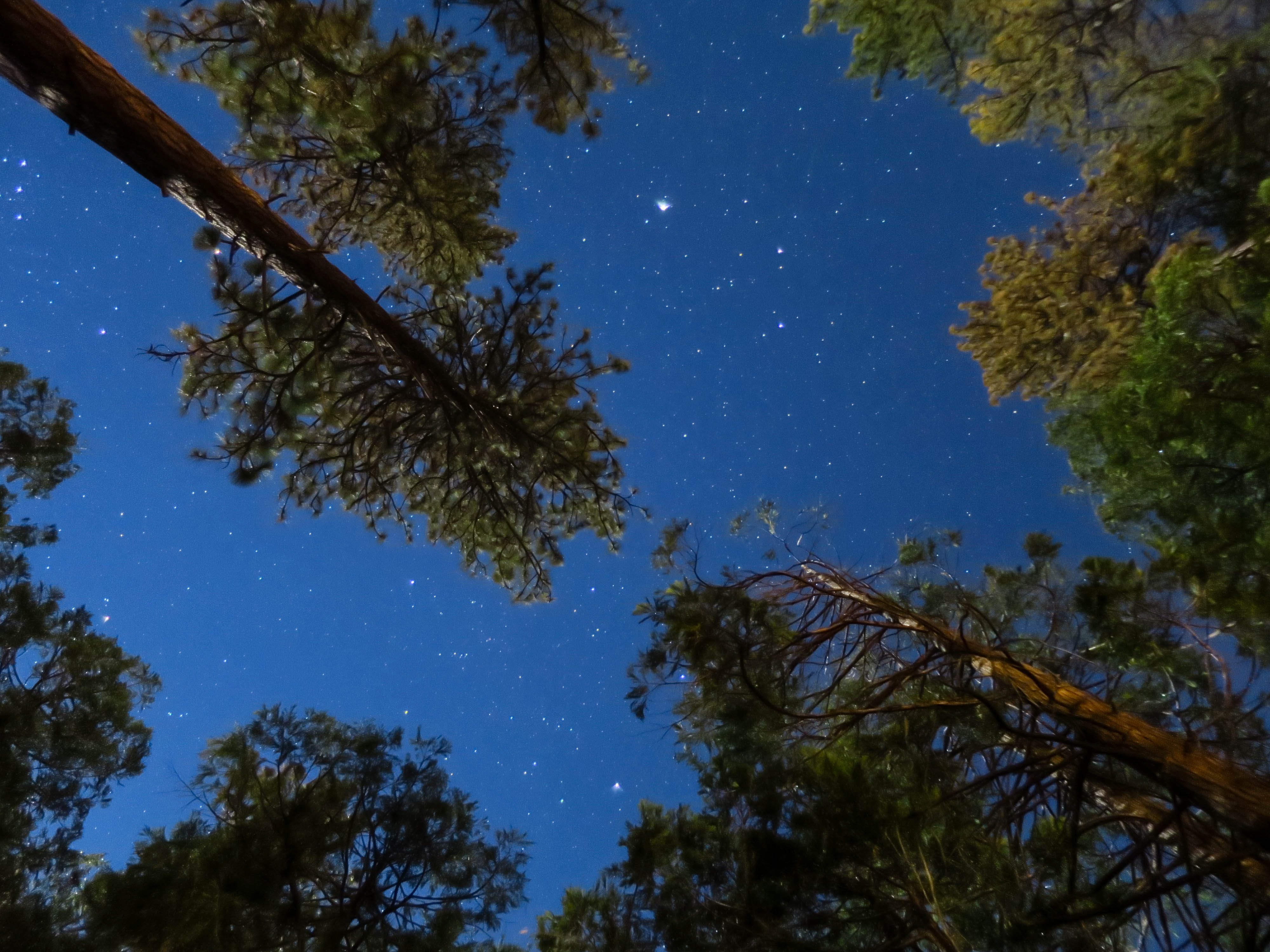 Idyllwild Night Sky